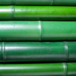 grüne Bambusrohre