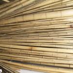 Bambusrohre
